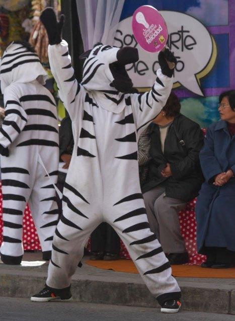 [:es]landing-zebra-1[:]